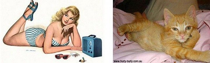 pinupcats14 Кошки и девушки в стиле пинап