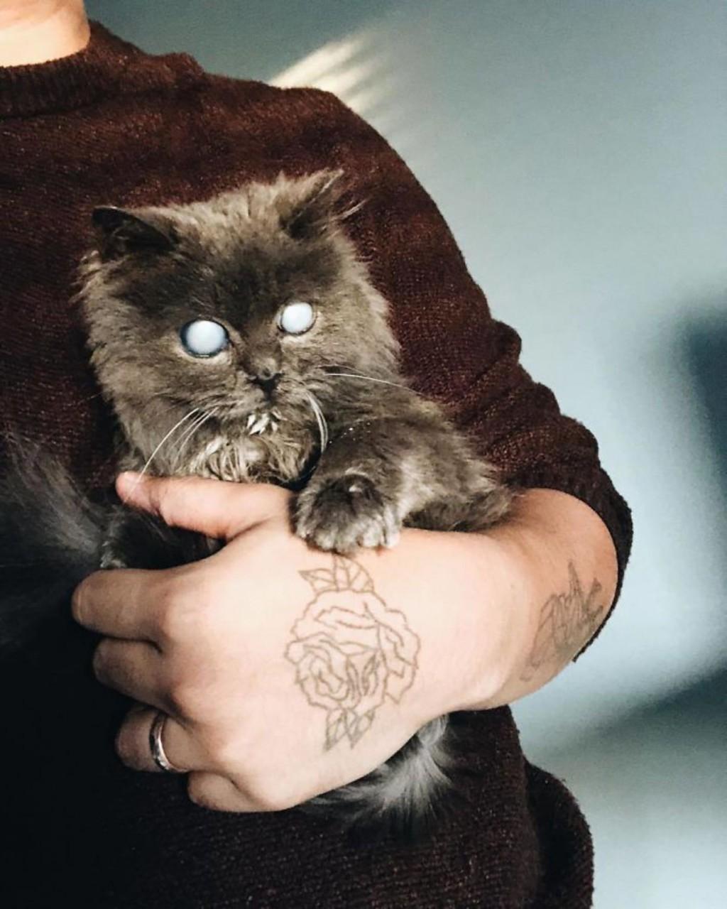 Похожий на Короля Ночи слепой кот покорил интернет