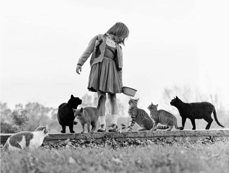 Уолтер Чандоха – человек, который 70 лет фотографировал кошек   8