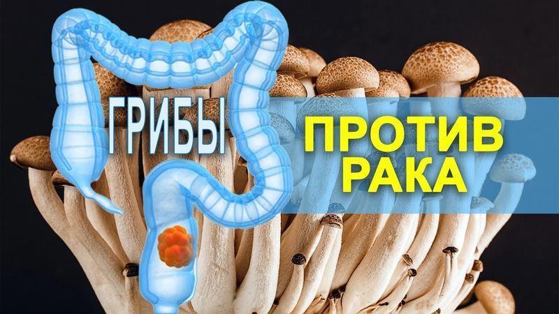 Как грибы спасают от рака: 8 целебных грибов от рака