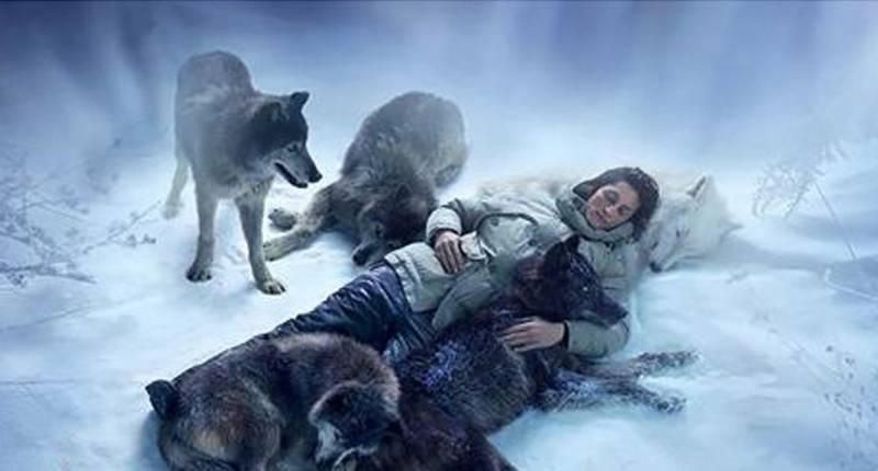 Волки с человеческим сердцем! Видео — трогает до слёз…