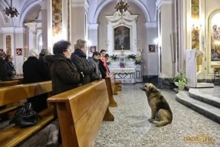 собака, преданность, истина, смысл