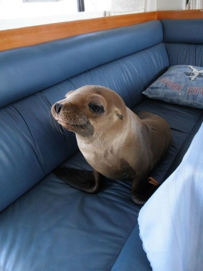 This Little Guy Jumped Onto Our Boat Strolled Into The Cabin And Made Himself At Home On The Couch