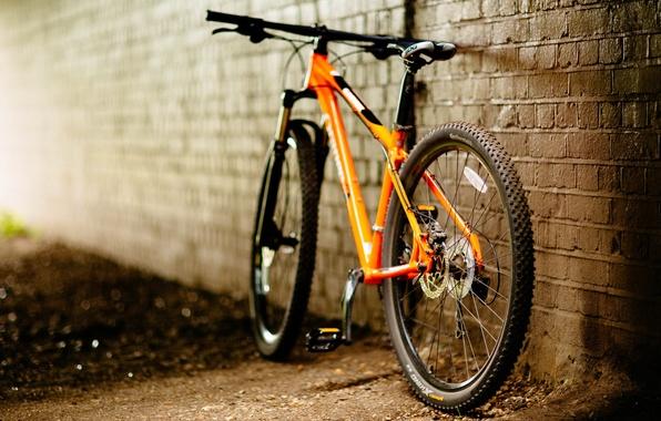 Найдена причина повального увлечения велосипедом.