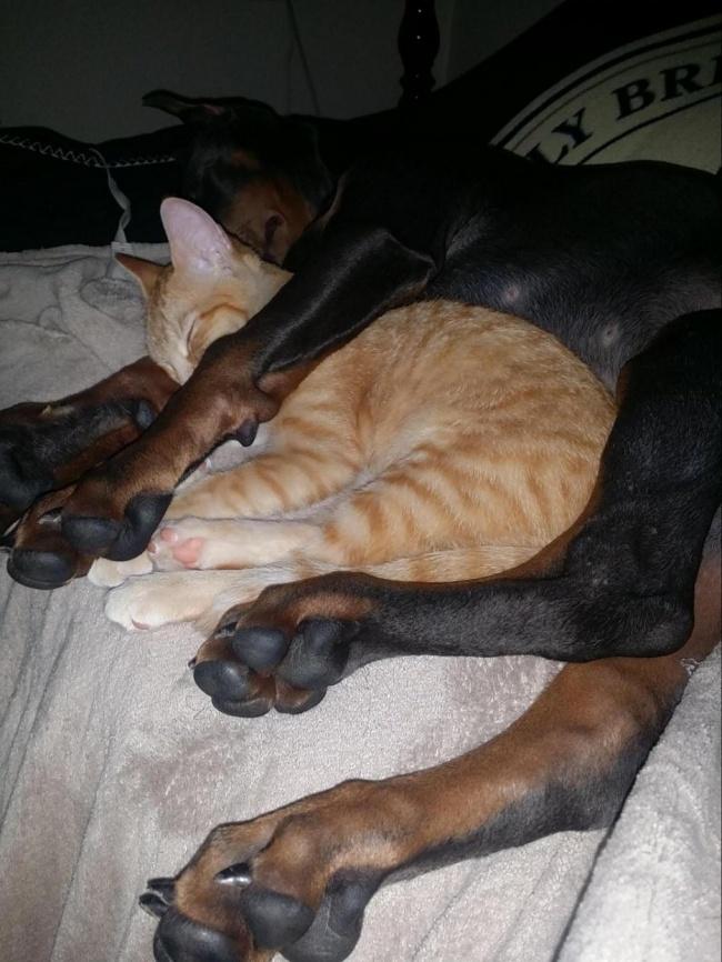 Прикольные животные. Животные, которые тоже устали (36 фото)