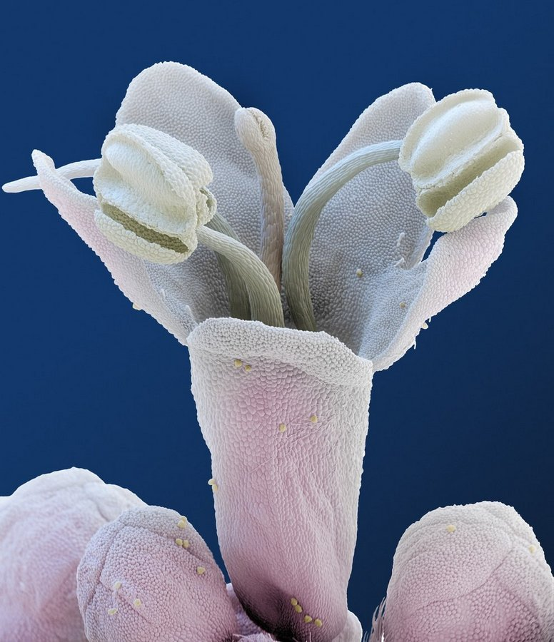 цветы под микроскопом