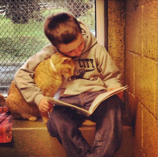 15 причин завести котика от Михалыча