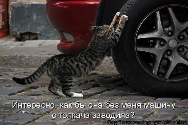 Животный авто-юмор
