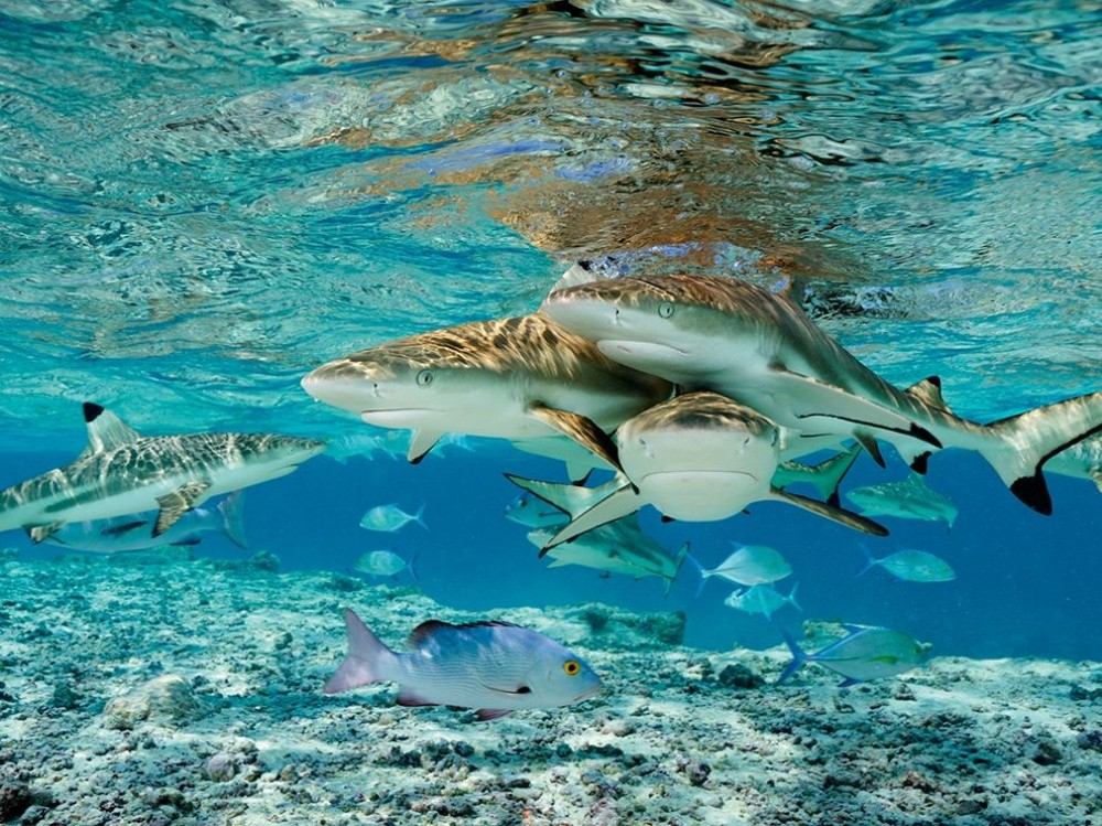 natgeo16 Topo Fotografias National Geographic setembro