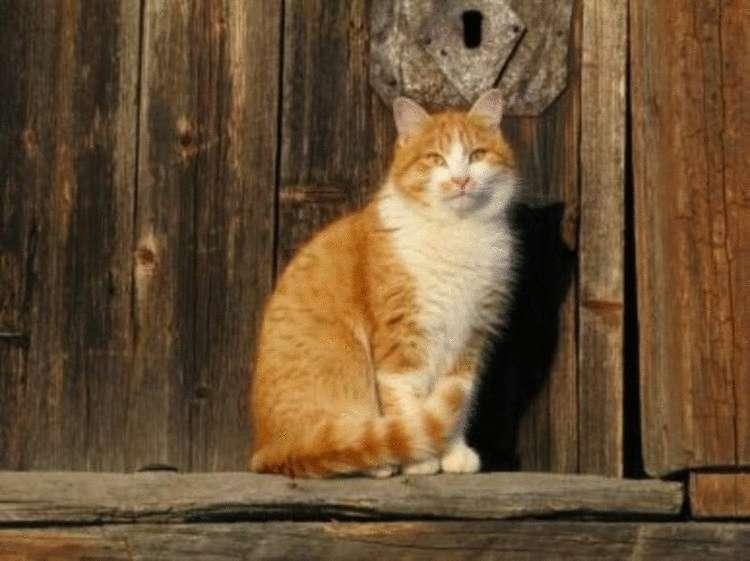 Почему кошки приходят в чужой дом — причины и приметы