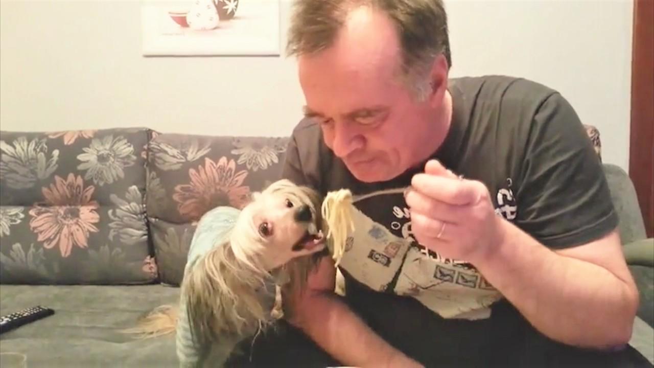 Самые смешные видео приколы про собак за неделю