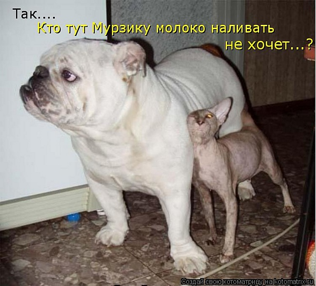 http://mtdata.ru/u9/photo97F4/20958057617-0/original.jpg