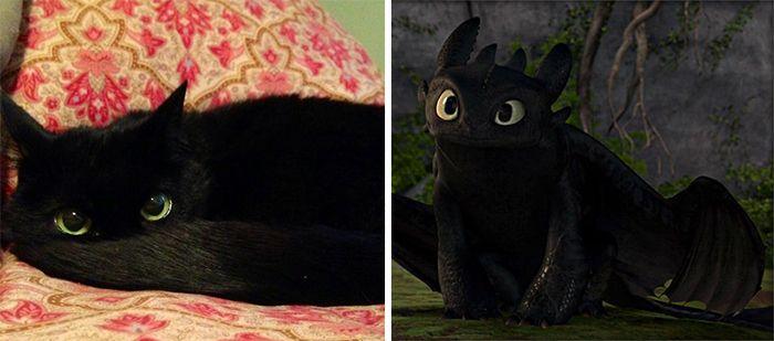 cat look like, ���� ������� �� �������������, ���� ������� �� ����� ������