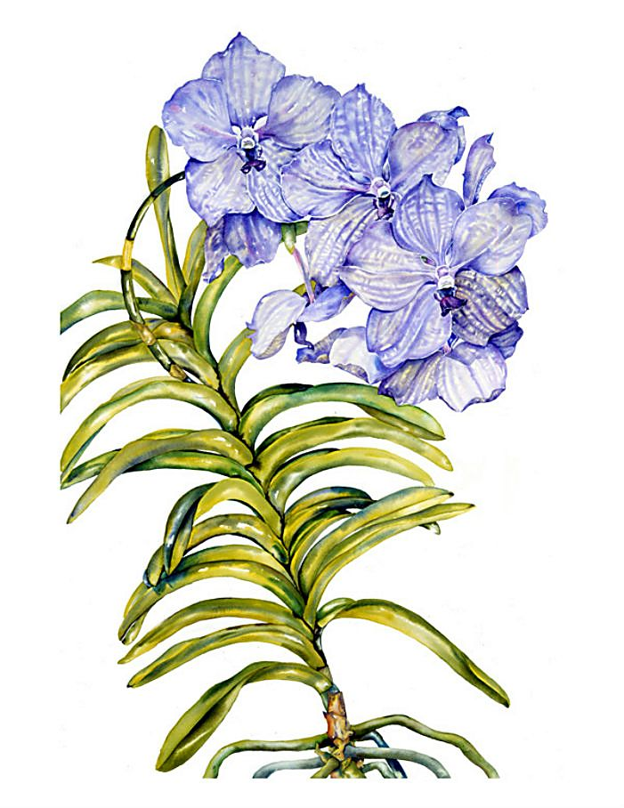 Цветы в акварели Sally Robertson