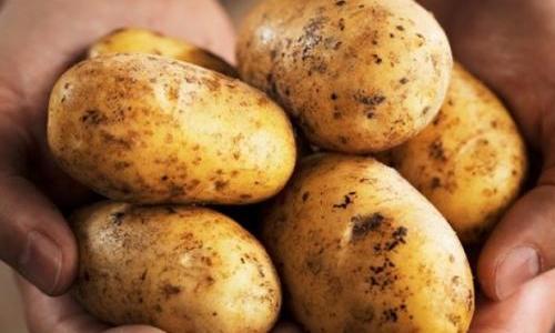 Блюдо из картофеля, которое …
