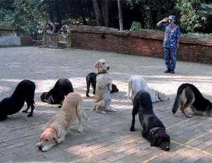 Smeshnyie sobaki 51 300x230 Смешные собаки