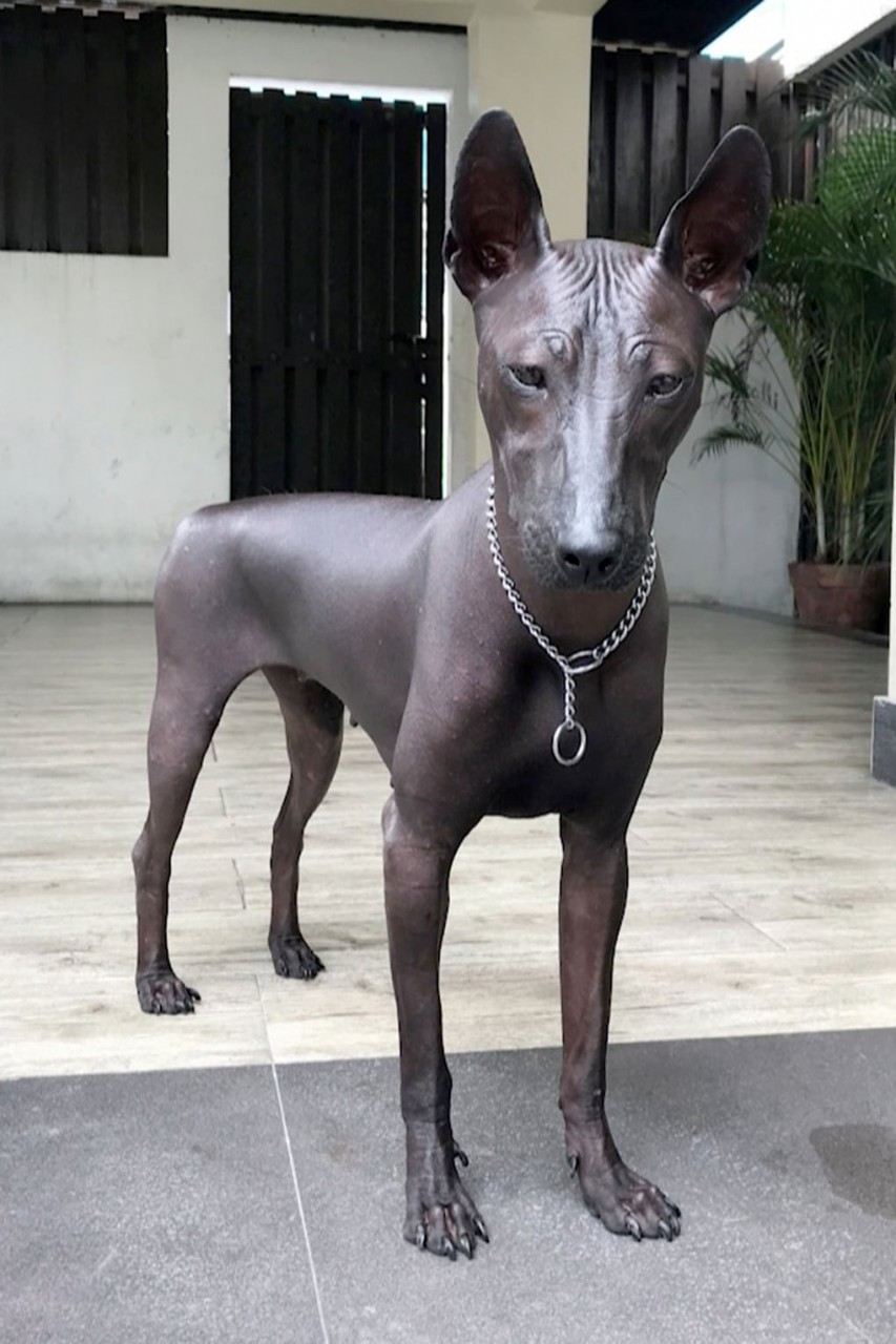Люди в интернете не сразу могут определиться, кто на фото: собака или статуя