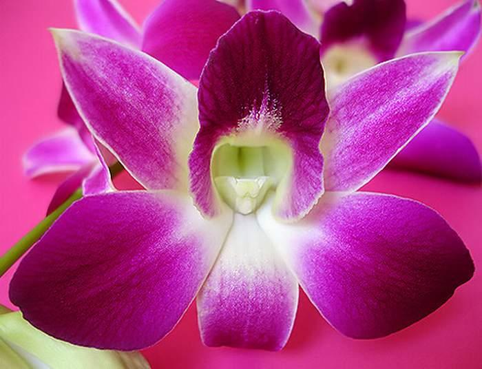 Фото цветы, Орхидея горшок, Орхидея