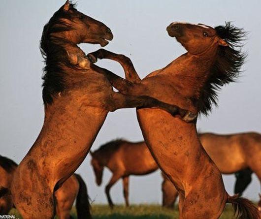 1247597627_1246987288_dance-dance-nature-rryorirsrsr-animals