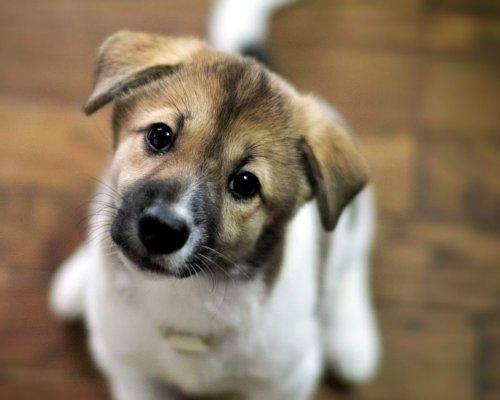 Мозг собаки умеет отличать н…
