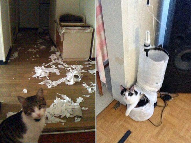 В каждом коте живет маленький дьявол кот, животные, интересное