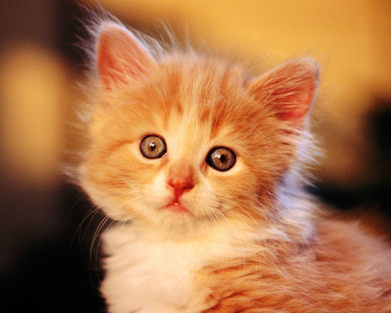 Дневник котёнка