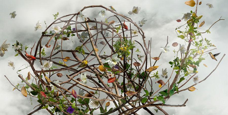 08Wonderment Фото фьюжн Изабел ЛеМэй