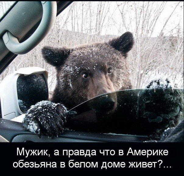 ПРИКОЛЬНЫЕ КАРТИНКИ С НАДПИСЯМИ.ЭДВАЙСЫ-52.