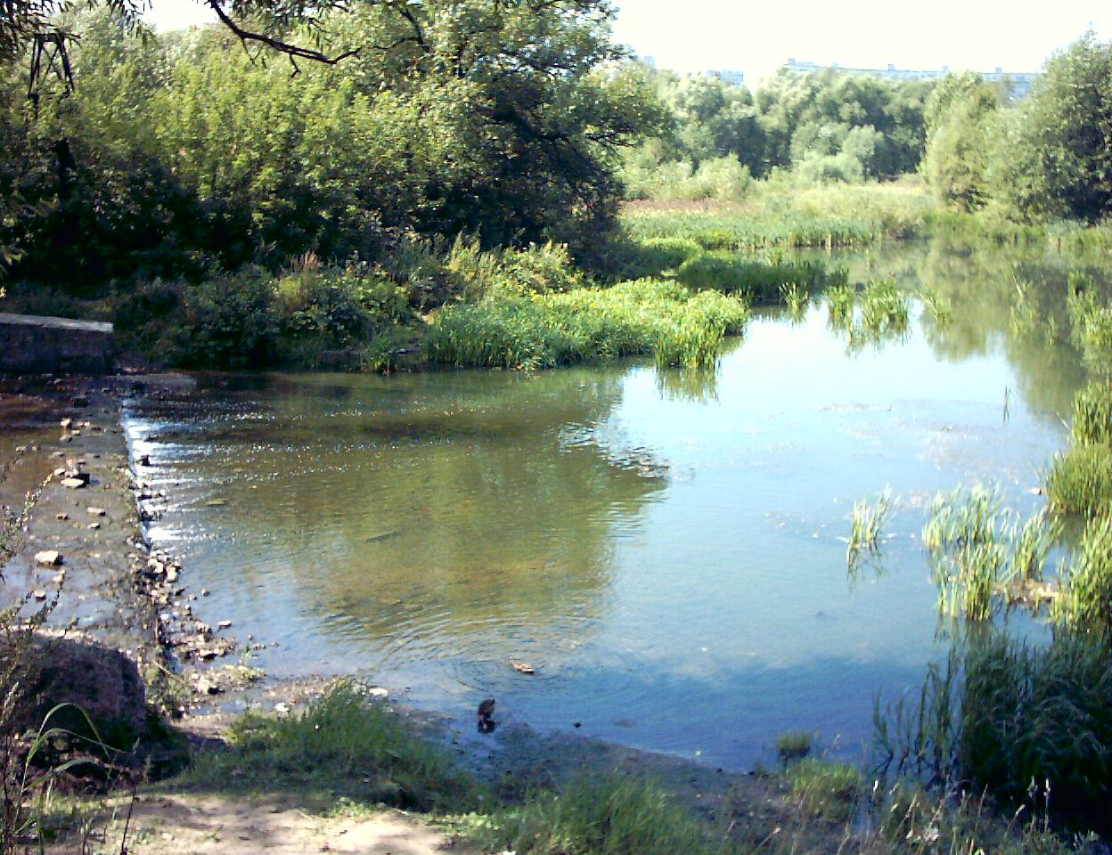 рыбалка старый пруд