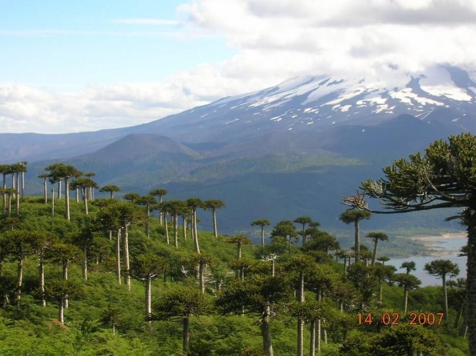 forests35 Леса с другой планеты!