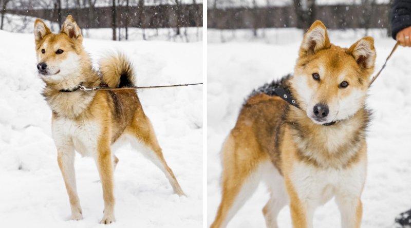 Приютский пес стал донором для домашней собаки и благодаря этому обрел хозяев