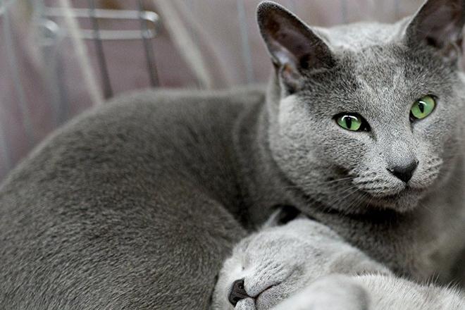 Домашний кот, который своими лапами уничтожил целый вид птиц