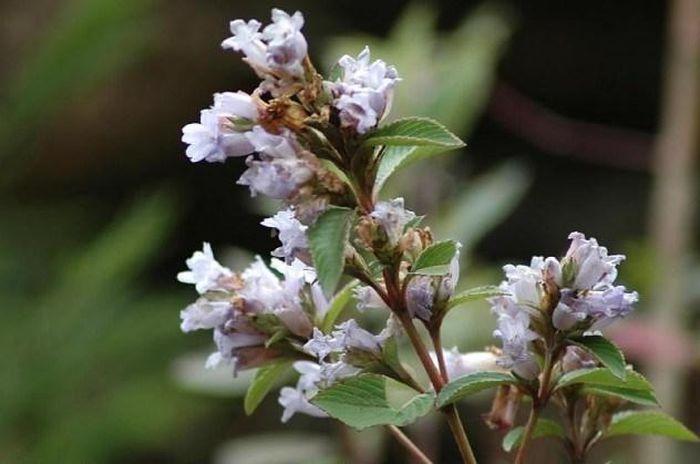 Самые редкоцветущие растения