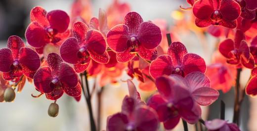 Самая большая орхидея может вырасти до 20 метров в высоту