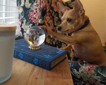 собака и хрустальный шар