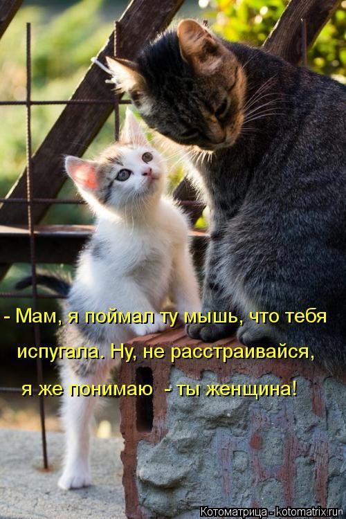 Котоматрица: - Мам, я поймал ту мышь, что тебя испугала. Ну, не расстраивайся, я же понимаю  - ты женщина!