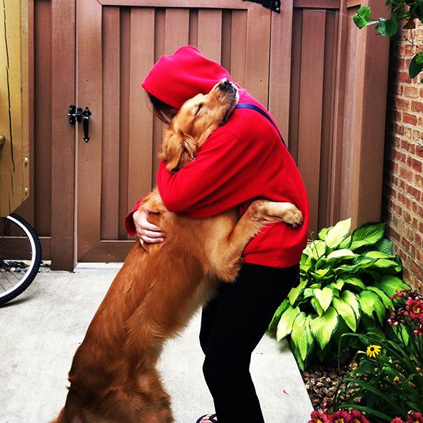 милые собаки обнимают своих хозяев (2)