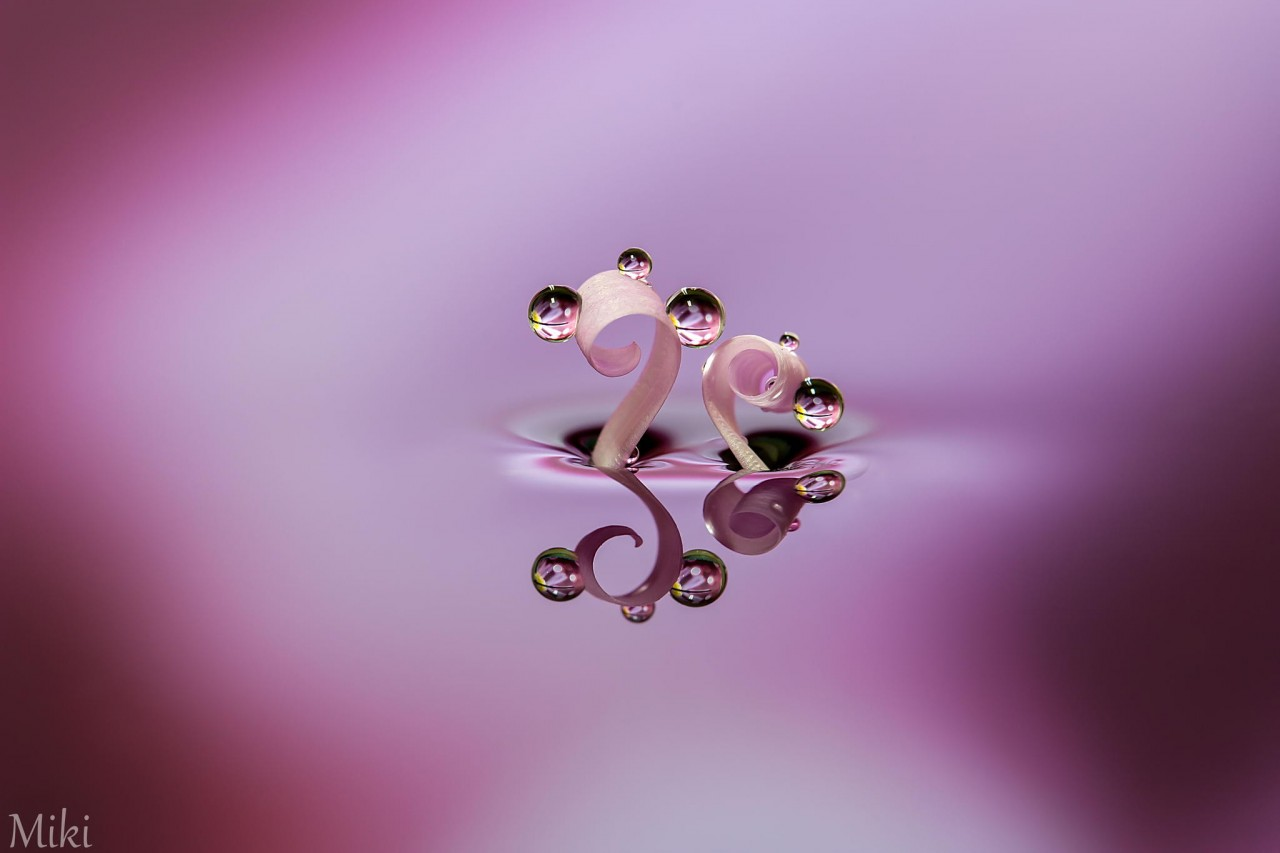 Фотография Beauty lasts forever автор Miki Asai на 500px