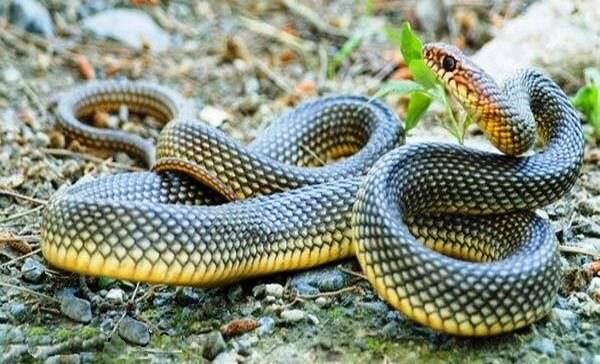 Избавляемся от змей на участке