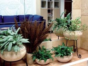 Уход за растениями в офисе.
