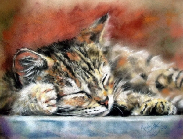 Очаровательные коты английского художника Пола Найта