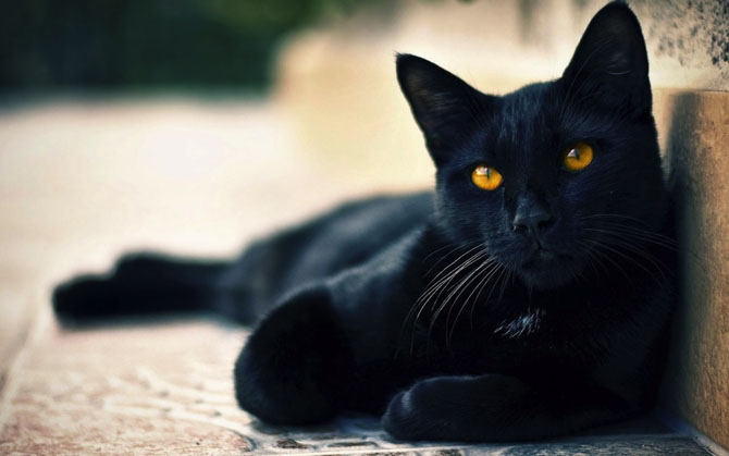 Влияние окраса кошки на ее характер Newpix.ru - позитивный интернет-журнал