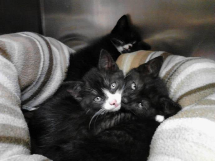 На прогулке с собакой женщина нашла ящик с 13-ю кошками