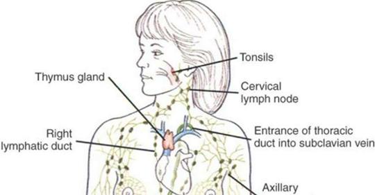 Когда вы в последний раз очищали лимфатическую жидкость?