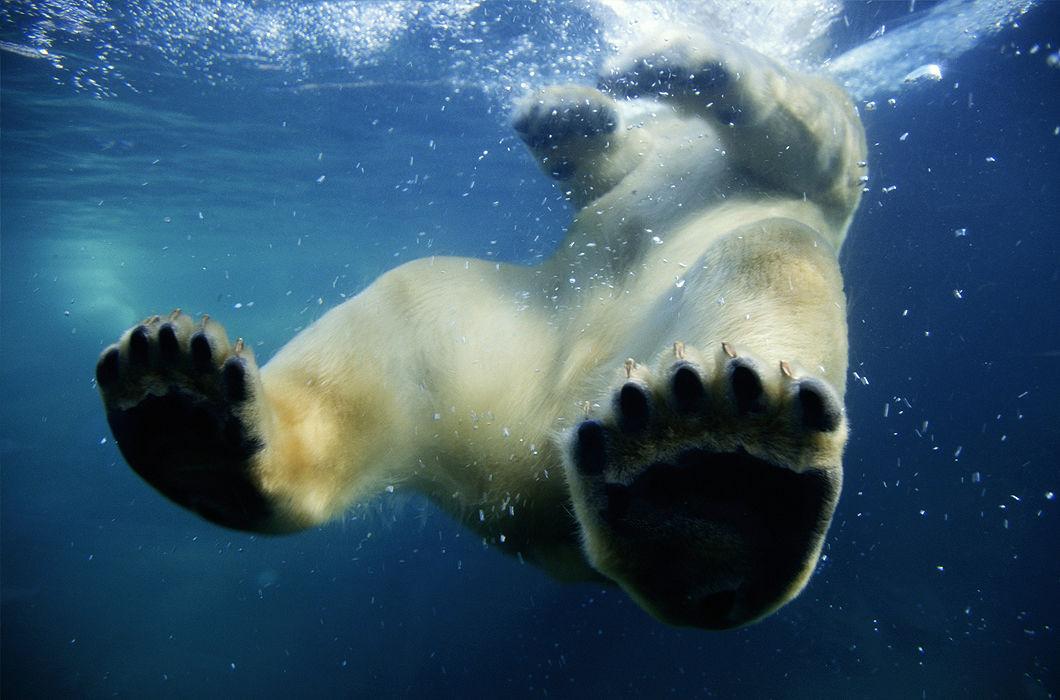 Фотоподпорка сухопутных животных, застигнутых за плаванием