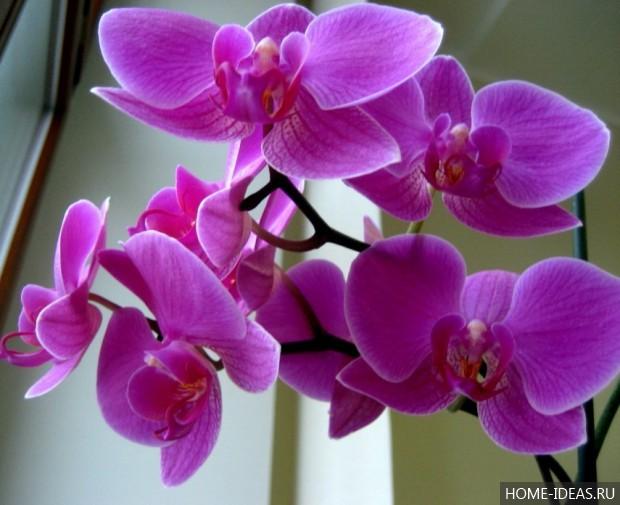 Фото цветка орхидея и уход