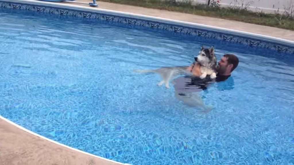 Заботливый хозяин устраивает своему псу водную терапию