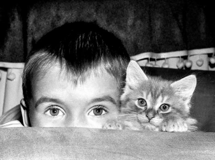 Уолтер Чандоха – человек, который 70 лет фотографировал кошек   8 2