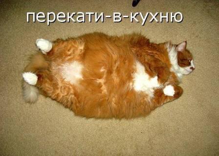 смешные фотографии про лишний вес