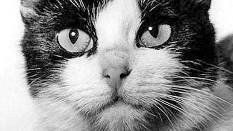 Дай на лапку: пользователи сети собирают деньги на памятник кошке-космонавту